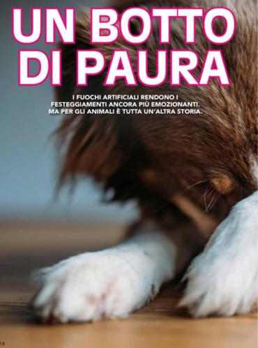 Dog company News Dicembre - Gennaio 2020 (1)